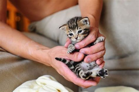 cute kittens    pc