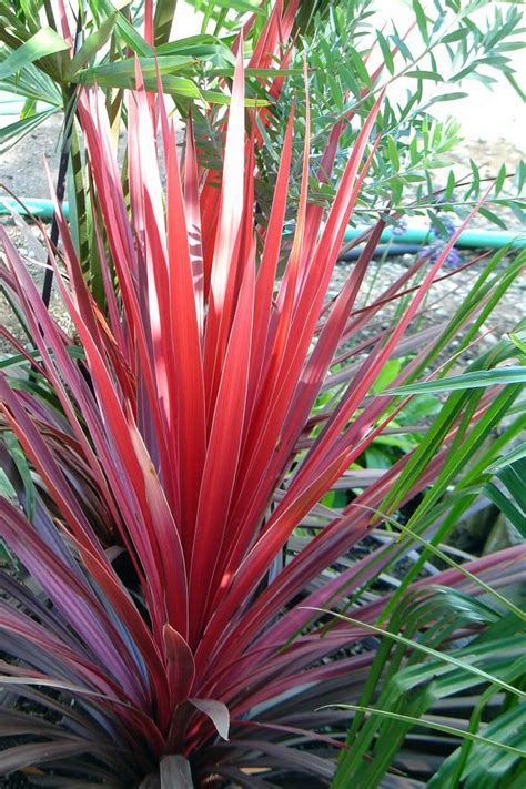 25+ Best Ideas About Red Plants On Pinterest Red
