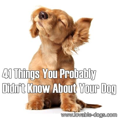 lovable dogs 41 things you probably didn t know about your