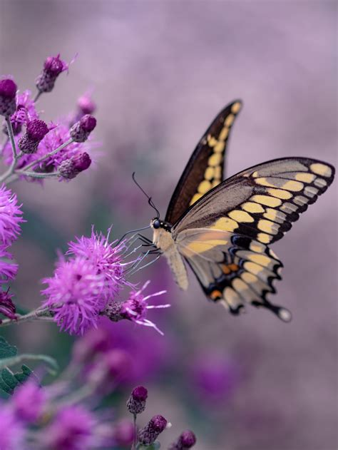 shallow focus photography  yellow  black butterfly