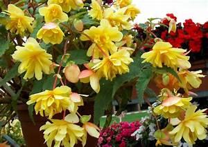 Blumen Für Schatten : blumenampeln verwenden auch im schatten ~ Lizthompson.info Haus und Dekorationen