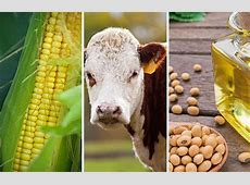 Weekly Options on Agricultural Futures