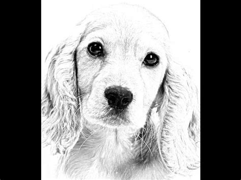draw  dog easy spaniel puppy fast timelapse step  step process youtube