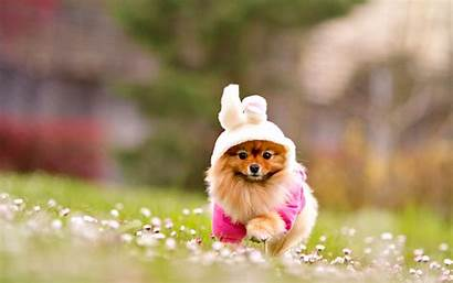 Adorable Dog 1920 Dogs Wallpapers Puppies 1200