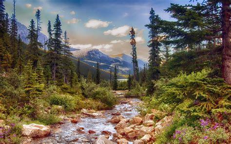 Alaska Landscape Nature Mountain Stream Pine Trees Spring ...