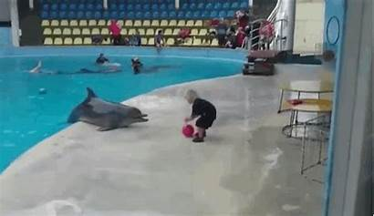 Play Dolphin Dolphins Playing Child Humans Sea
