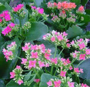 Pflegeleichte Zimmerpflanzen Mit Blüten : pflanzenportraits ~ Eleganceandgraceweddings.com Haus und Dekorationen
