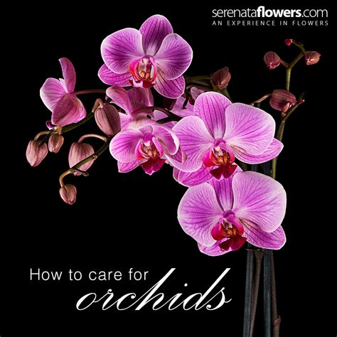 how to take care of orchids how to care for orchids