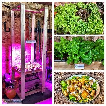 Hydroponic Grow Lettuce Different Systems Nosoilsolutions Mediums