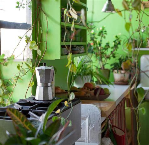pflanzen für wohnung pflanzen in der wohnung wohndesign interieurideen