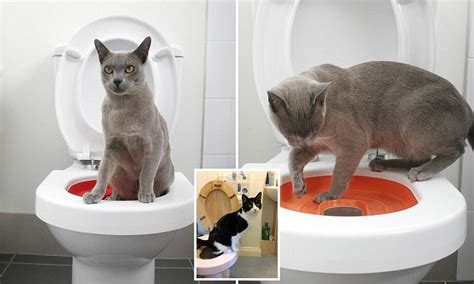 how to teach a cat to use the toilet how to toilet your cat book promises to