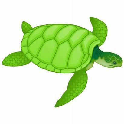 Clipart Turtle Ocean Animals Sea Cliparts Clip