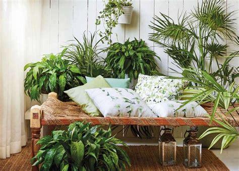 Pflanzen Im Zimmer by Beste 20 Pflanzen Im Schlafzimmer Beste Wohnkultur