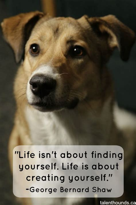 inspirational quotes   year pet quotes