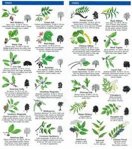 Australian Fruit And Vegetable Garden