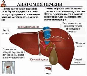 Препараты лечения и профилактики простатита у мужчин