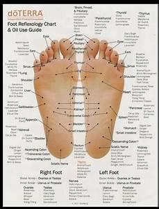 Foot  Hand  U0026 Ear Reflexology Chart  U0026 Oil Use Guide