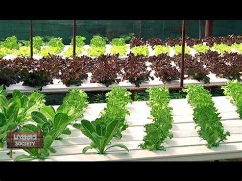 การปลูกพืชไร้ดิน - wipamadee