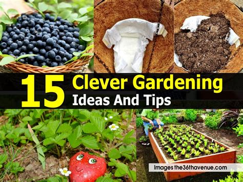 15 clever gardening ideas and tips