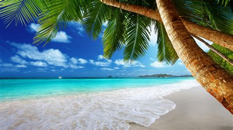 Tropical Backgrounds by Tropical 4k Ultra Hd Wallpaper Background Image