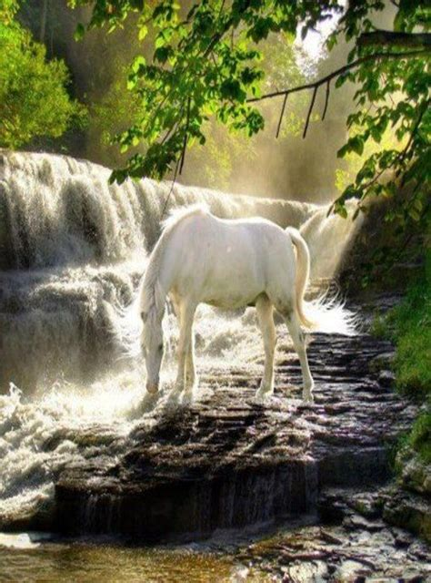 horse   drink  water fall  love horses