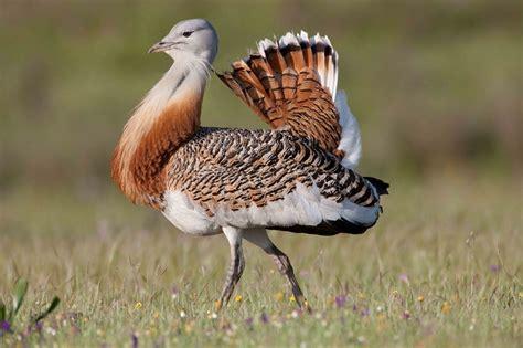 Sistemātika - Visi putni