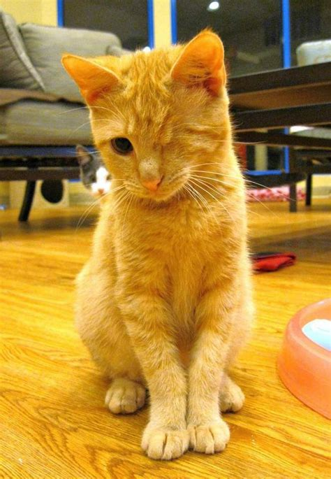 Paw Print: Young orange tabby wants a normal life | NJ.com