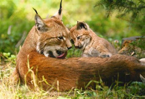 beloningskaarten dieren met jong
