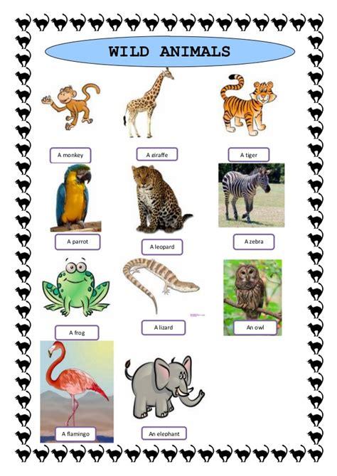 wild animals study sheet