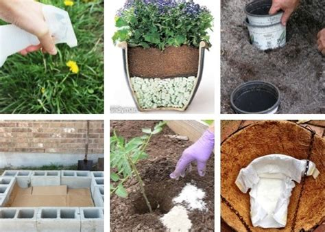 14 most clever gardening tips and ideas site for everything