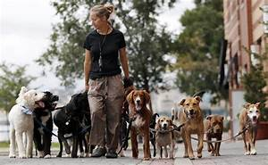 Five things you should know about the professional dog for Professional dog walking service