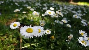 Ein Natürlicher Dünger : stadtgarten nat rlicher d nger einfach selbst gemacht ~ Lizthompson.info Haus und Dekorationen