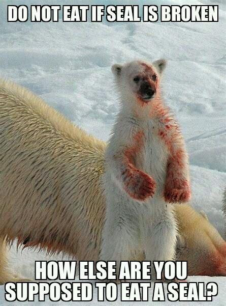 funny polar bear meme images  pictures memesboy