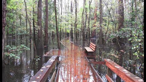 rains flood congaree national park wltxcom