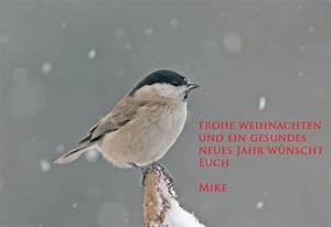 Gesundes Neues Jahr Sprüche : frohe weihnachten und ein gesundes neues jahr forum f r naturfotografen ~ Frokenaadalensverden.com Haus und Dekorationen