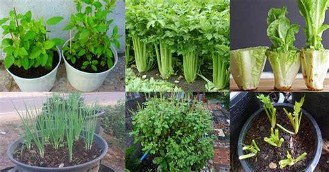 การปลูกพืชผักสวนครัวในรูปแบบของกระถาง แม้ว่าพื้นที่ในบ้าน ...