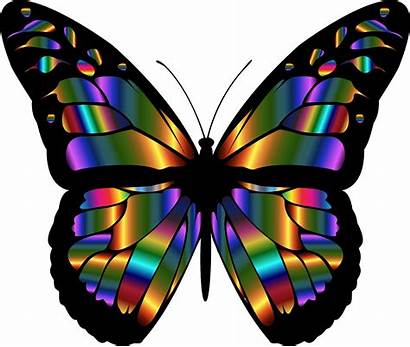 Colorful Butterflies Butterfly Monarch Clipartmag Iridescent