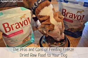 freeze dried raw dog food salmonella food With costco raw dog food