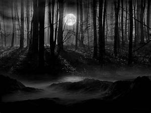 Dark Forest Pictures – WeNeedFun  Dark