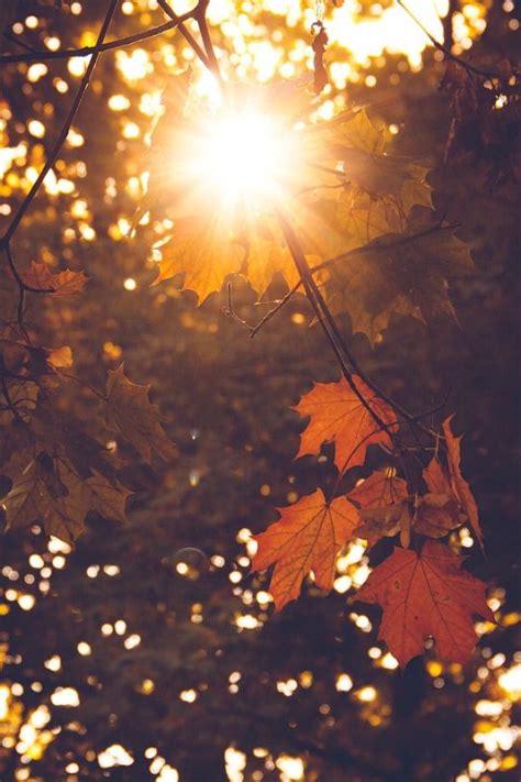 autumn cozy mabon autumn autumn cozy autumn day