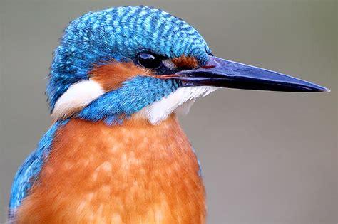 vogel bedeutung der eisvogel ist vogel des jahres 2009 nabu