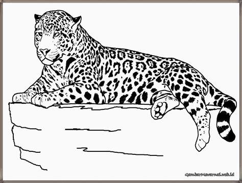Coloring Harimau by Gambar Mewarnai Harimau Gambar Mewarnai Coloring Pages