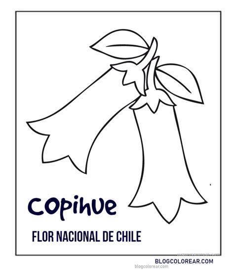 colorear copihue flor nacional de chile colorear dibujos infantiles