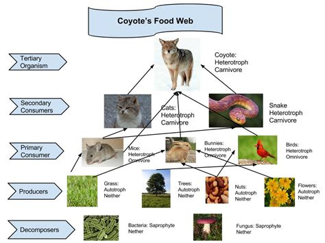 web cuisine chaparral food web pixshark com images galleries