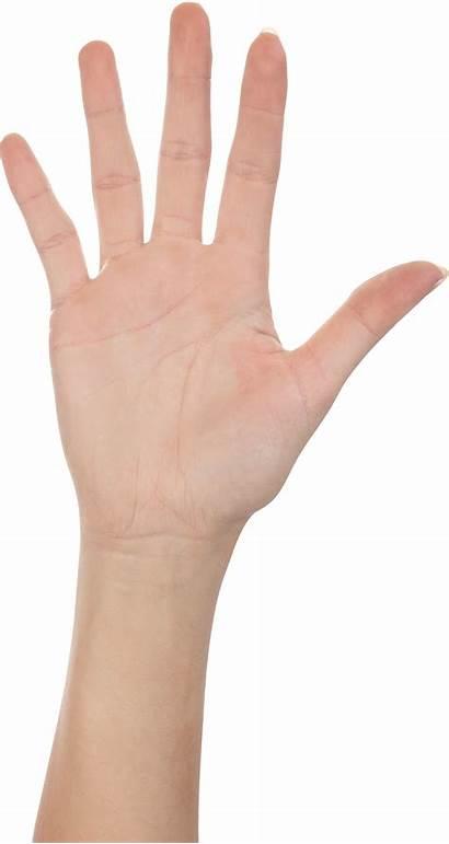 Hand Hands Finger Five Clipart Transparent Forearm