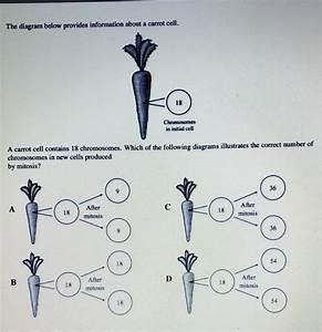 Plz Help Urgent     50 Points The Diagram Below Provides