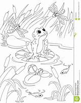 Pond Coloring Pages Printable Frog Template sketch template