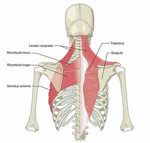 Super Drill to Strengthen Your Scapular Stabilizers ...