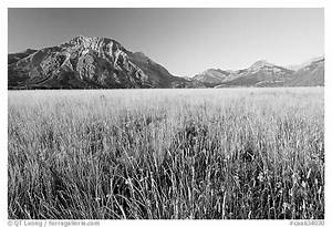 Black and White Picture/Photo: Tall grass prairie and ...