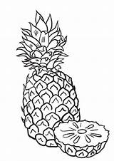 Pineapple Coloring Indiaparenting Sliced Whitesbelfast Credit sketch template